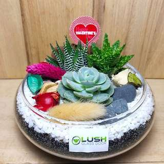 ❤️Perfect Gift for Valentine's Day/ V Day/ Valentine/ Anniversary/ Christmas/ Xmas/ Birthday/ Congrats/ Farewell/ House warming - Real Plant Succulents/ Cactus Terrarium