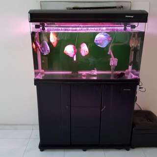 Tank and Discus fishes for sale!!!