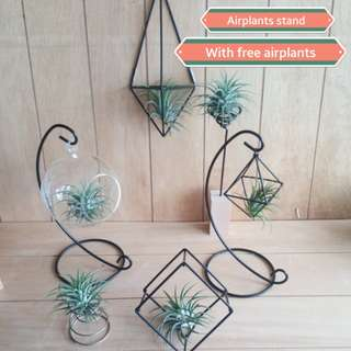 Airplants holders