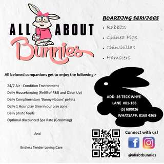 All About Bunnies Boarding Services
