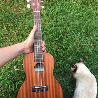 Cordoba up100 ukulele