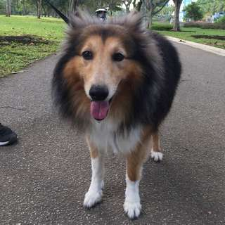 [Searching for] Dog Walking Services