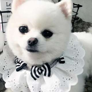[Pre-Order] Handmade Black and White ribbon-laced dog neck collar