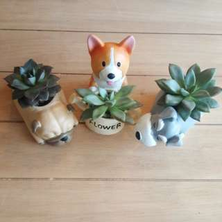 Doggie Planters with Succulents
