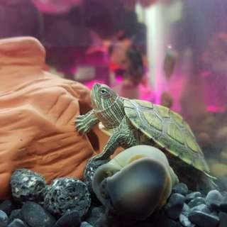 Terrapins for Free