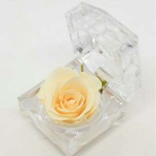 Preserved Rose - Champagne Colour