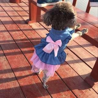 🚚 現貨* 超可愛寵物衣 牛仔拼接紗裙 L號