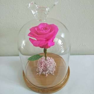 Pink rose in glass jar