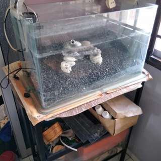 2 X Fish tank and fish tank rack