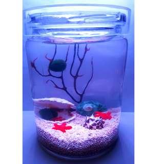 Red Starfish and Clam Eco Home for Opae Ula, nano shrimp, hawaii shrimp, brackish shrimp, super   shrimp, wonder mini shrimp, volcano shrimp