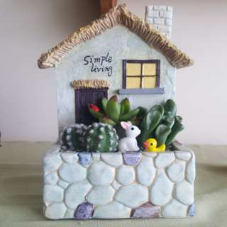 Succulents _country farm house
