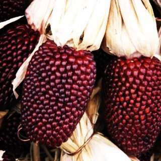 Corn/Popcorn 'Red Strawberry' seeds