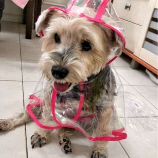 Pet Raincoat
