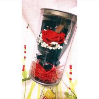 🚚 JOURNEE日光花房永恆乾燥玫瑰花紅色