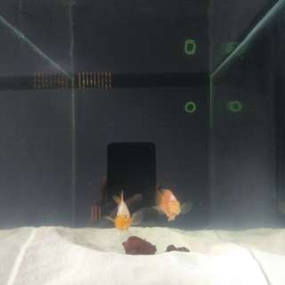 "Fish tank with two fish 2""Ft"