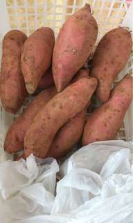有機高原蕃薯