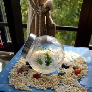 Air Plant - Baby Andreana in Bottle