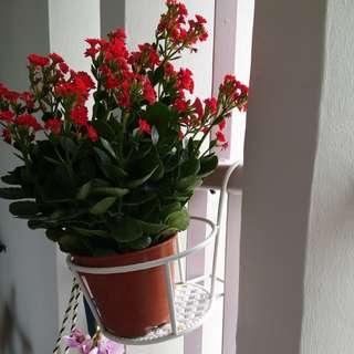 Flower pot hanging holder