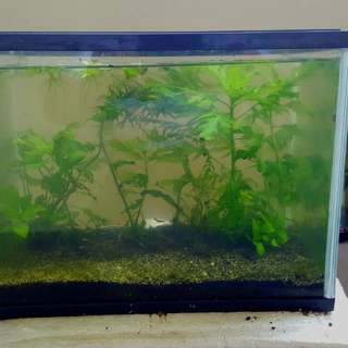 Clear Acrylic Tank with real plants