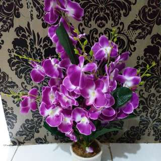 Orchids with vase