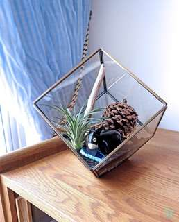 Aerium: Humble Cabin (L) with air plant