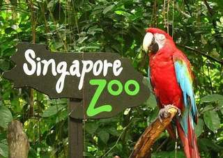 Singapore Zoo (Tram Ride included)