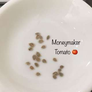 Moneymaker Tomato 🍅