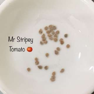 Mr Stripey Tomato 🍅