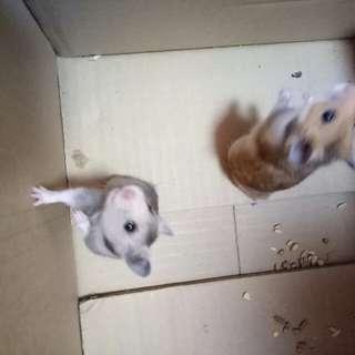 🐹 Hamster boarding/ hotel 🏨