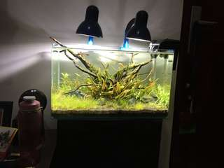 Fresh water AquaScape Aquarium complete set