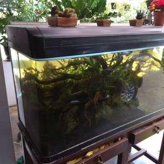 Jual cepat aquarium full set sama isinya