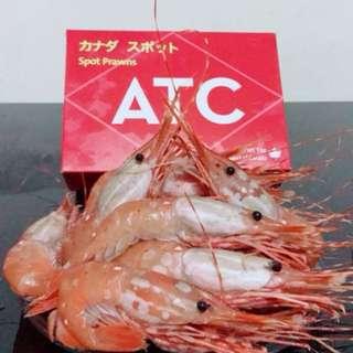 加拿大珍寶牡丹蝦