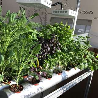 Custom made automatic hydroponic indoor system