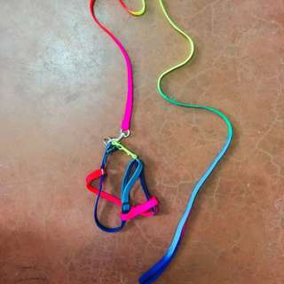 Rainbow Dog/Cat leash