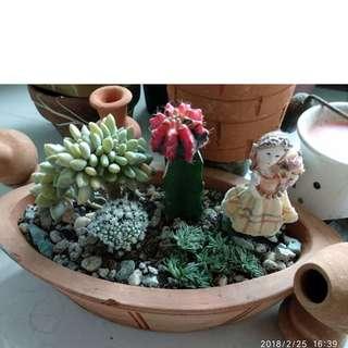 Beautifu Semi-rare Succulent Dish Garden