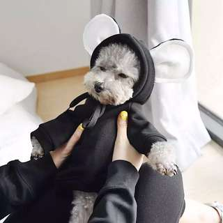 Floppy hoodie for dogs and cats 🐻