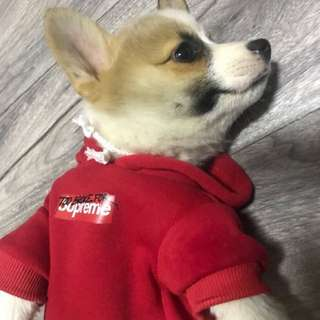 Too broke for Supre pet hoodie