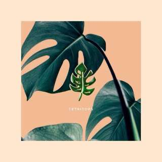🍒12 instock! monstera pin