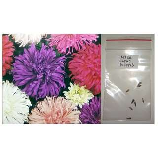 Aster Flower Seeds (Crego Giant)