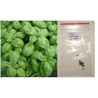 Sweet Basil Herb Seeds (Genovese)