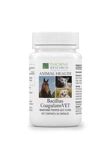 Thorne Research Veterinary - Bacillus CoagulansVET - Helps Maintain Proper Gut Flora - 60 Capsules