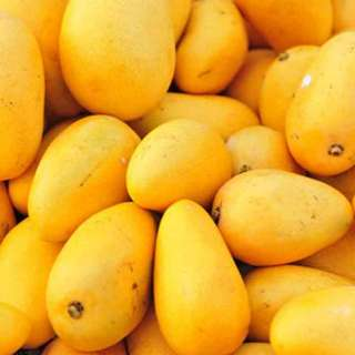 Delicious Pakistani sweet mangoes