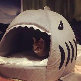 🚚 寵物鯊魚窩