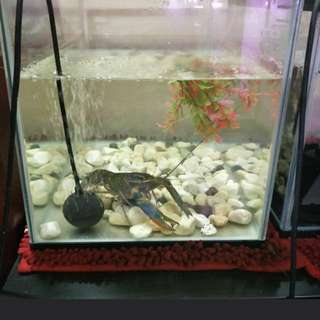 Fish Tank with ClayFish