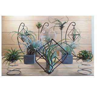 AIR PLANTS AND HOLDERS