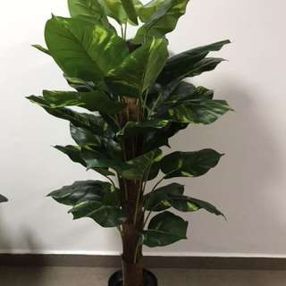 Artificial Money plant