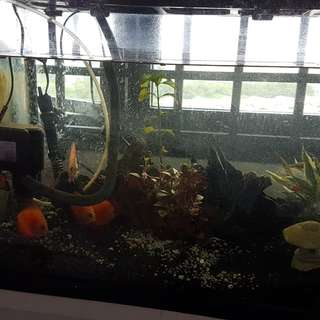 1 n half  Fish Tank on sale