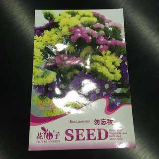 Sea Lavender Seeds