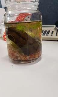 miniature fish tank