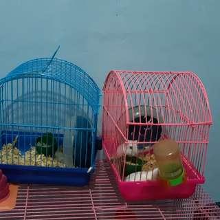 Kandang + hamster 2